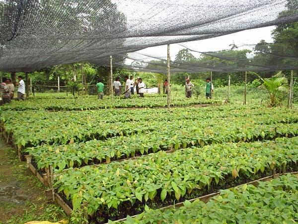 Manejo integral de fincas con nfasis en cacao para cinco for Manejo de viveros forestales