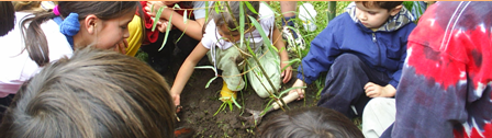 Proyecto Planta un Árbol por tu Futuro