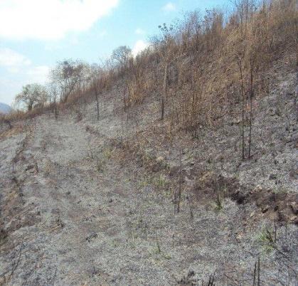 Proyecto de Reforestación en el Bosque Protector Cerro Paraíso-Guayaquil para la Empresa LINDE Ecuador S.A
