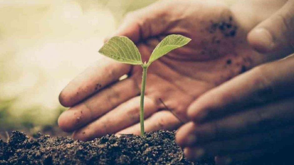 Reforestación en seis países podría detener el cambio climático
